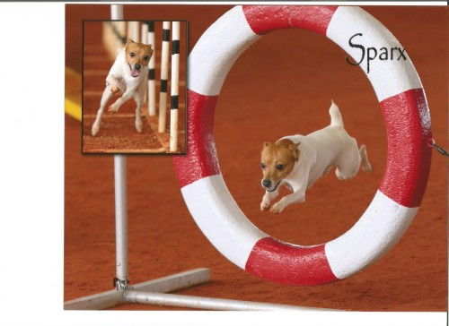 Sparx doing agility 001